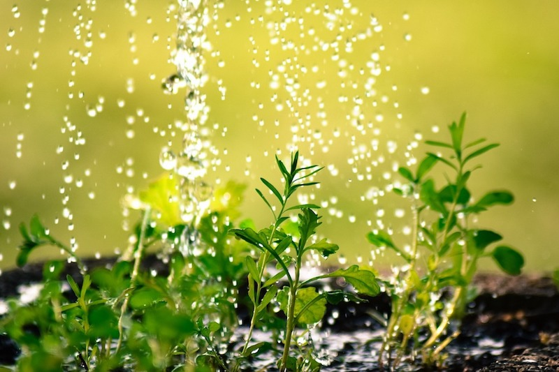 Rasen Gießen Im Sommer Tipps Und Hinweise Garden Blog