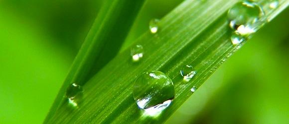 Rasen gießen im Sommer – Tipps und Hinweise