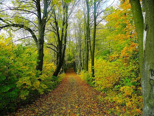 Wald mit Ahorn