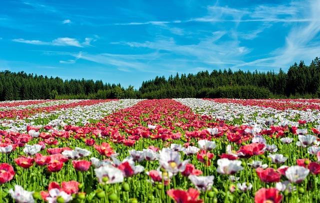 Pflanzen kaufen – so geht's im Gartencenter