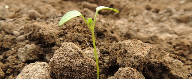 Häcksler, Motorsäge und Axt – die richtige Gartenarbeitskleidung