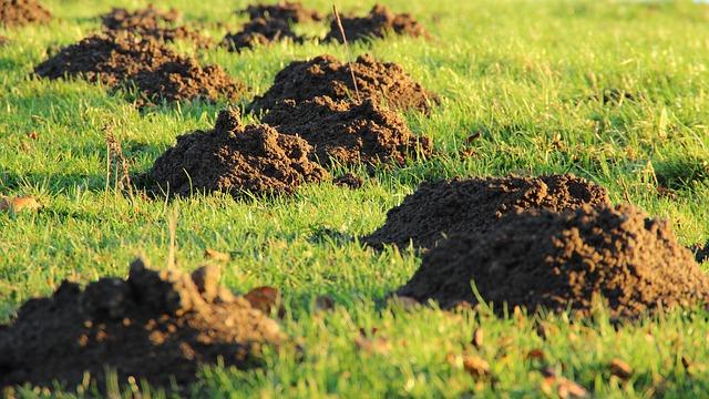 5 Ideen um Maulwürfe aus dem Garten zu vertreiben