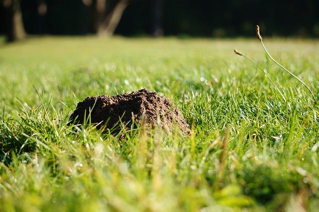 So werdet ihr Maulwurflöcher im Rasen los