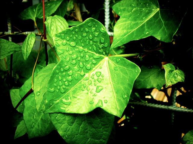 Garten: Regentage sinnvoll nutzen