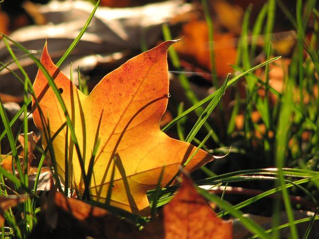 Update: Wie sich unser Garten im September schlägt