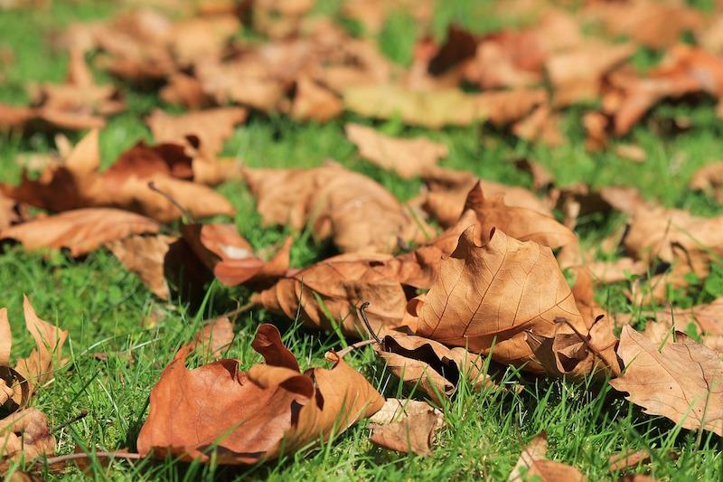 Herbst: Das hilft euch die Jahreszeit im Garten zu meistern