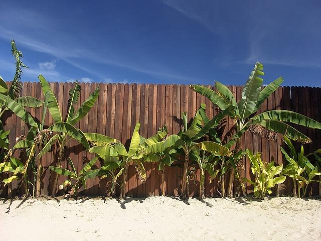 Palmen in deutschen Gärten