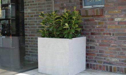 Pflanzkübel – Welches Material eignet sich für welchen Standort?