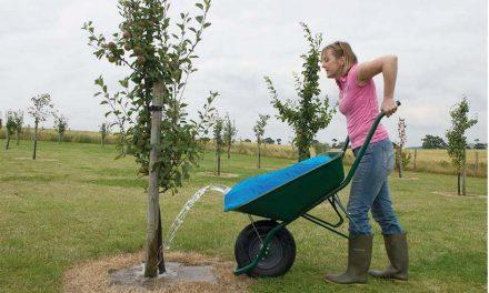 Gartensaison 2017: Diese Geräte sollten auf keinen Fall fehlen