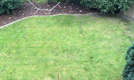 Rasen Wachst Nicht Typische Fehler Und Hindernisse
