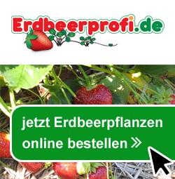 Erdbeerprofi