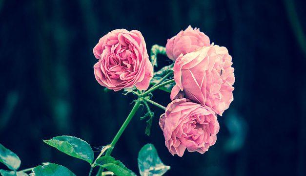 Perfekte Accessoires für exklusive Züchtungen im Rosengarten – 5 Tipps für das gewisse Etwas