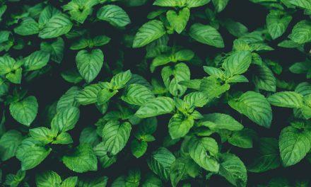 Endecke jetzt deinen grünen Daumen für frische Kräuter