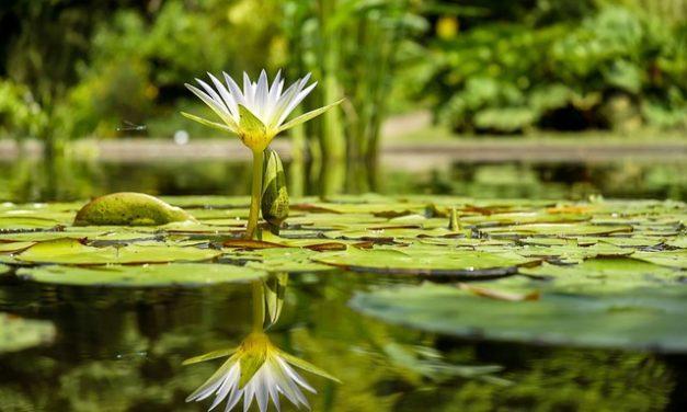 Ein Paradies mit Naturpool