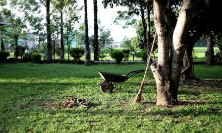 Tipps & Tricks zur Gartenneugestaltung