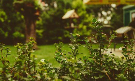 Eine Oase der Ruhe: So wird dein Garten zu deinem kleinen Paradies