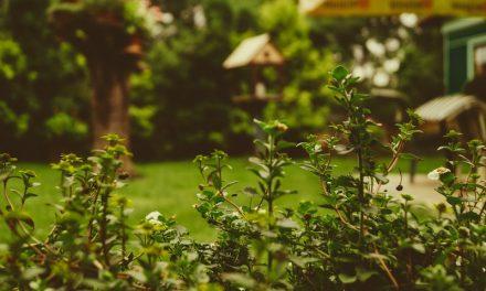 Schöne Fotos im Garten machen und bleibende Erinnerungen schaffen
