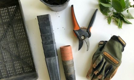 Gartenregale: Kaufen oder selbst bauen?