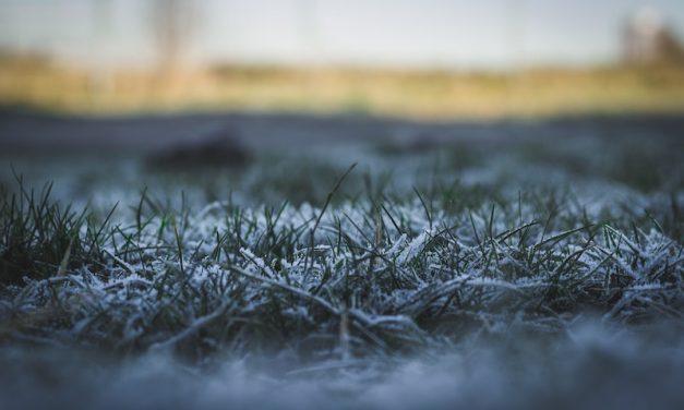 Den Rasen auf den Winter vorbereiten: Das muss beachtet werden