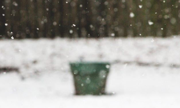Damit der Garten gut durch den Winter kommt
